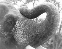 Wild elephant, Maharashtra