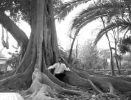 ancient tree, Seville