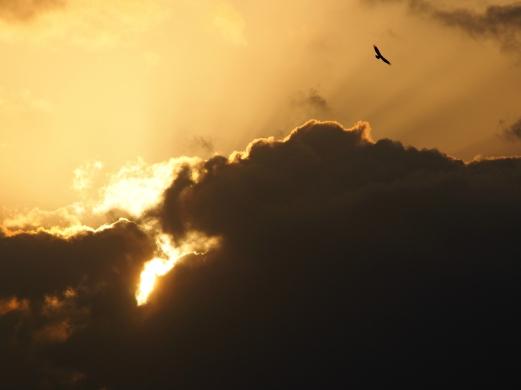 Holy Light, Hunsur, India.