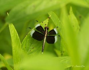 Jungle, India
