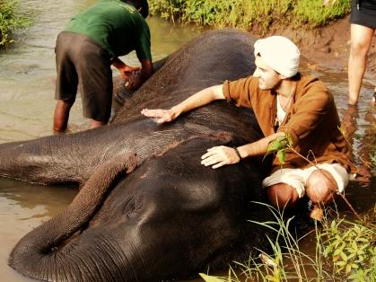 bathing baby elephant, mudumalai national park, India