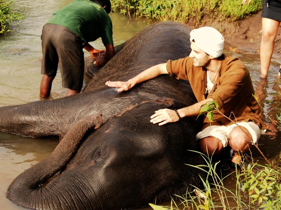 bathing baby elephant, mudumalai national park, India, 2015