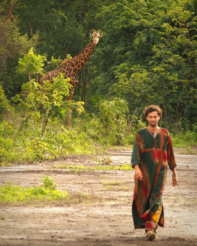 walking with a family of wild giraffes
