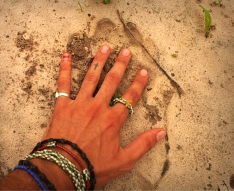 Lion pawprint