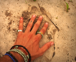 Lion pawprint, 2016, Senegal