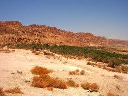 Judaean Wilderness