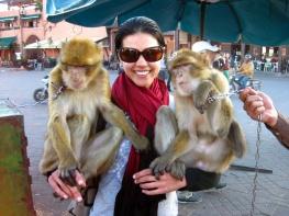 53-marrakech-monkey