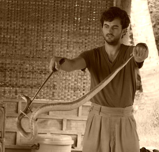 Wild Cobra, India, 2015